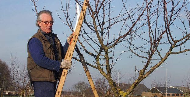 snoeien puber appel hoogstamfruitboom