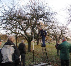 snoei-instructie hoogstamfruitbomen voor vrijwilligers.