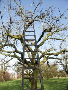 Houten fruitladder in hoogstamboom
