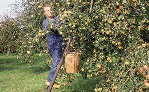 pluk hoogstamfruit